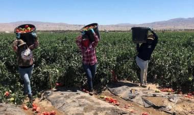 Trabajadoras de la tierra